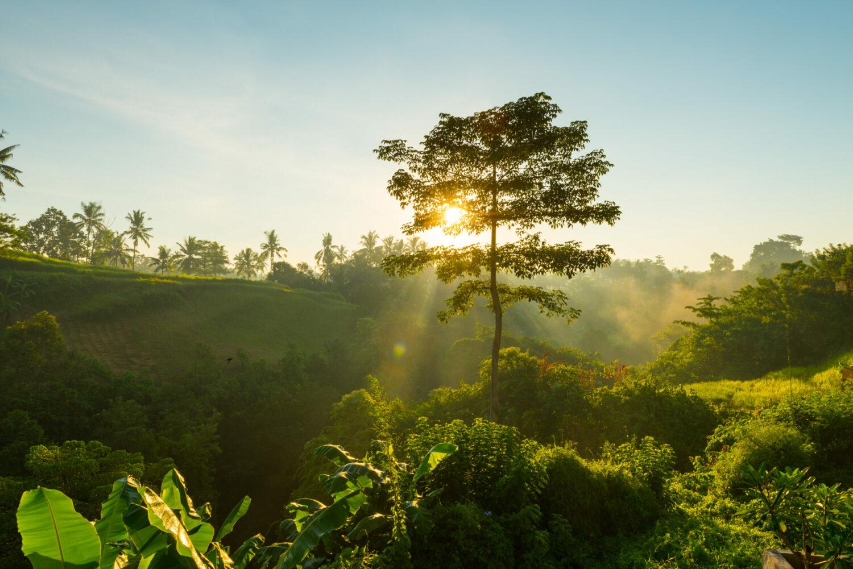Salida del sol en la jungla de Bali